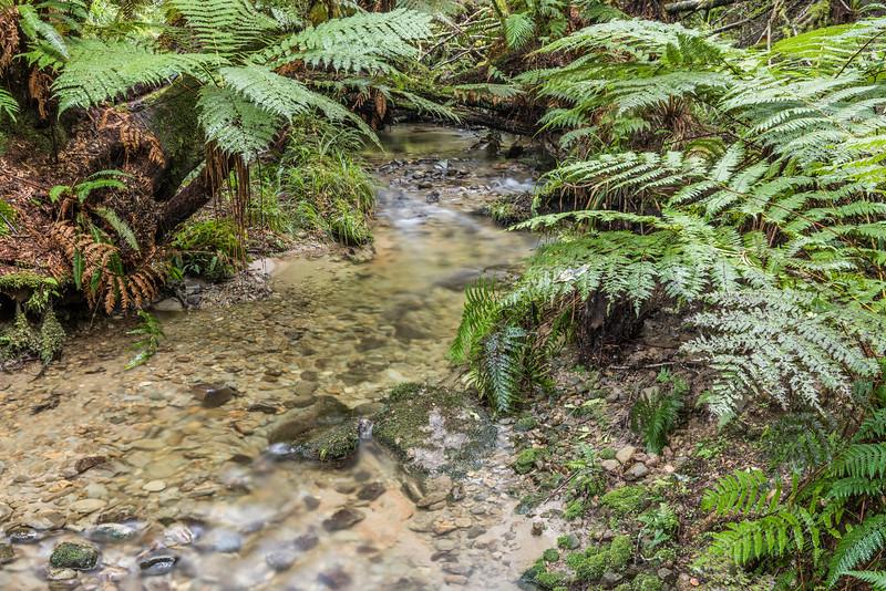 Waapu Stream, Lake Waikaremoana Track