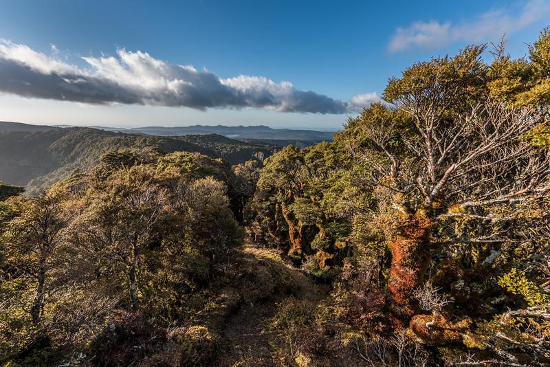 On the ridge between Manuoha and Pukepuke. Lake Waikareiti (destination for the day) and the Ngamoko range are in the background.