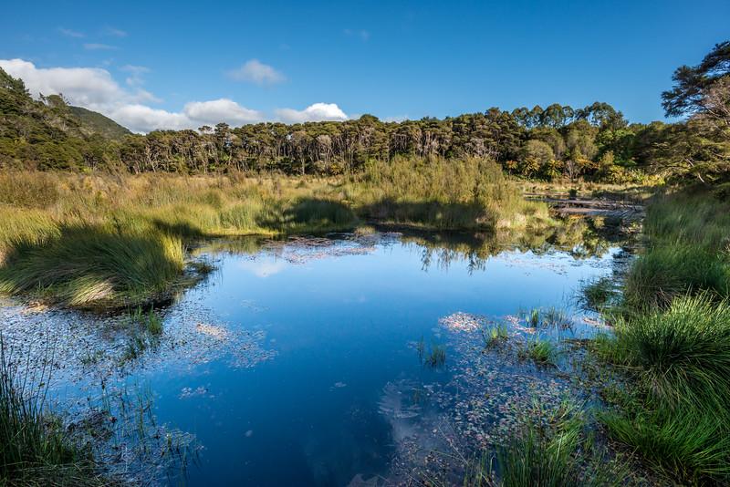 Wetland Walk, Awaroa Bay