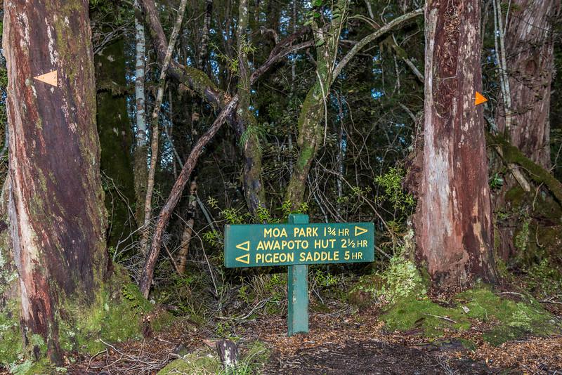 Evans Ridge, Abel Tasman Inland Track