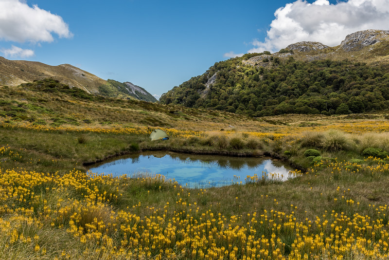 Campsite in Ellis Basin, Arthur Range, surrounded by Māori onion (Bulbinella hookeri).