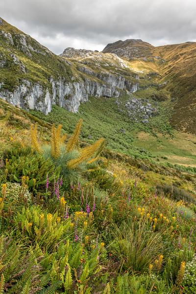 Wildflowers at the head of Nuggety Creek. Mount Owen, Kahurangi National Park.