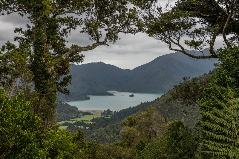 View of Nydia Bay from Kaiuma Saddle