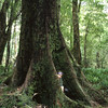 Lake Creek forest