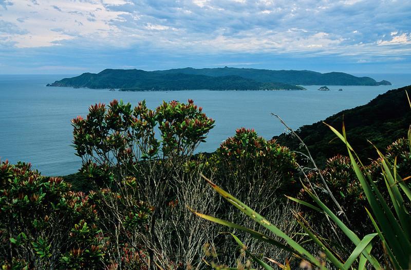 Codfish Island / Whenua Hou