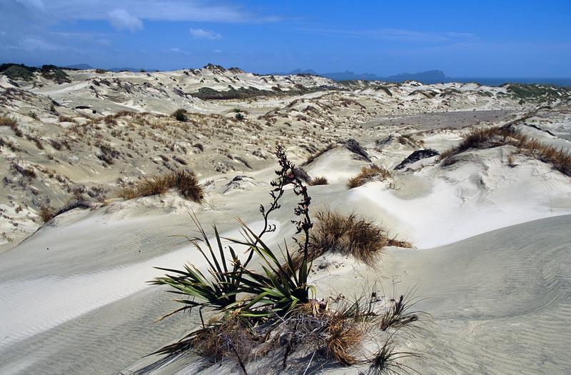 Sand dunes, Mason Bay
