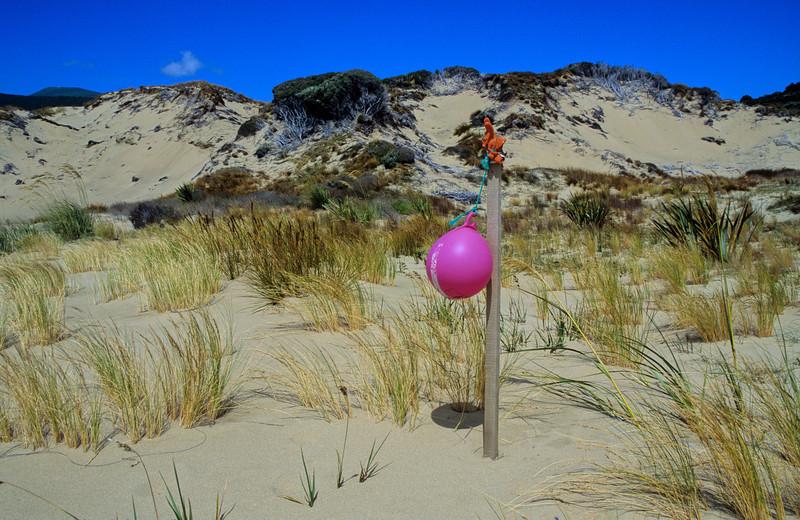 Sand dunes, East Ruggedy Beach
