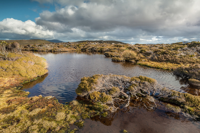 Bog on Adams Hill