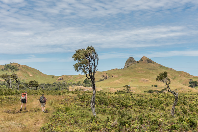 Approaching Te Whakahewa / The Horns. Cape L'Eveque, Chatham Island.