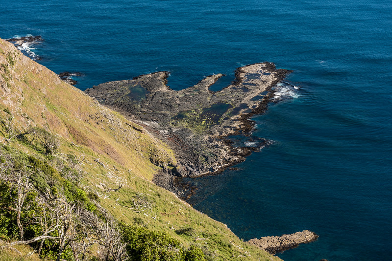 Green Point. Chatham Island south coast.