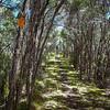Manuka forest near Rakeahua Hut