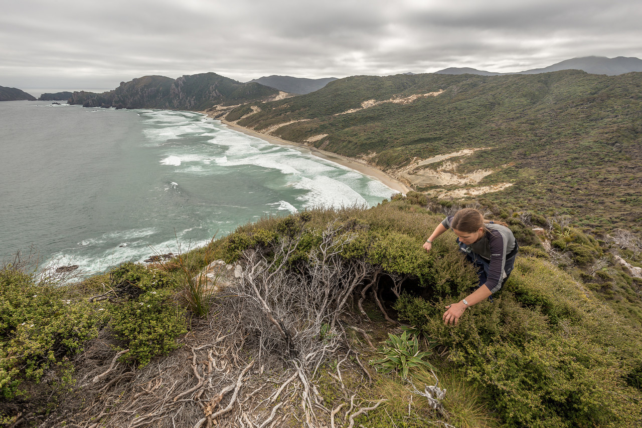 Getting to the top of North Red Head. West Ruggedy Beach below