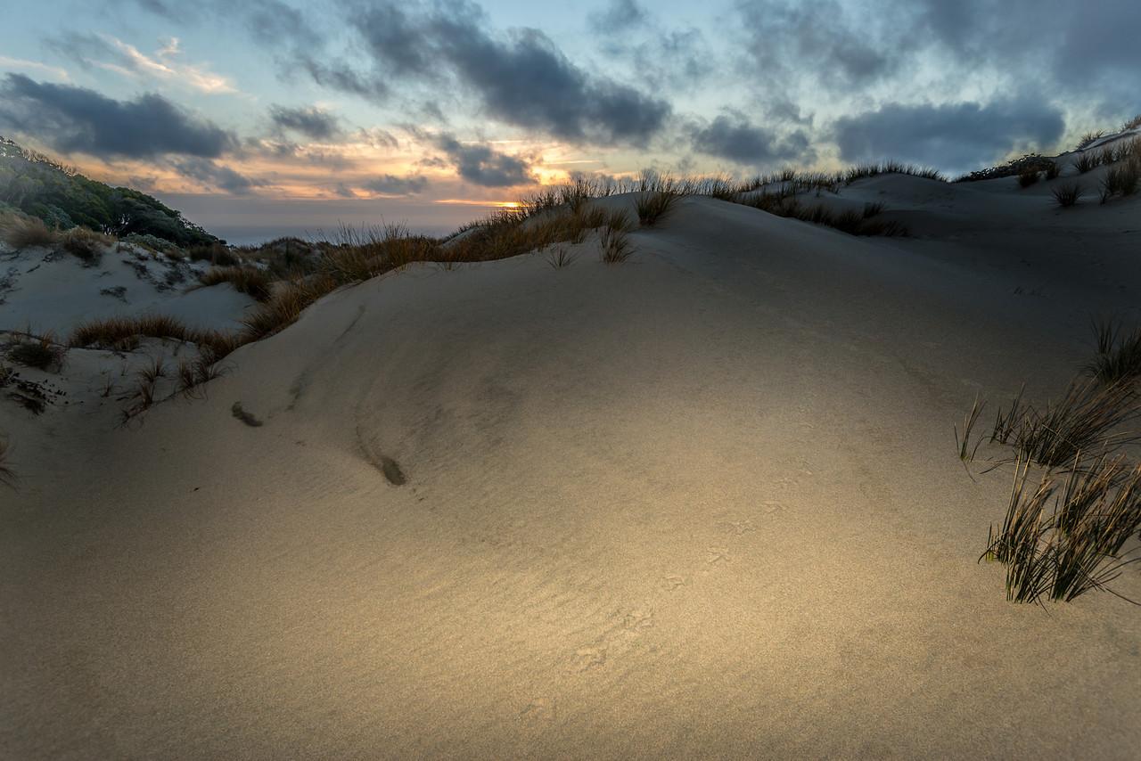 Kiwi footprints on sand dune, Hellfire Pass