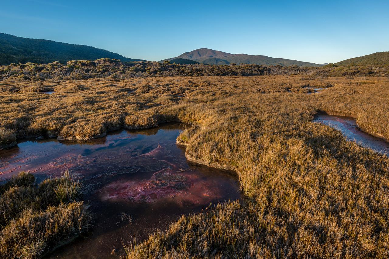 Rakeahua River swamps. Mount Rakeahua at centre image