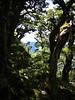 ...and drop 600m to Atiwhakatu stream...