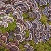 Wood-rotting fungi in Duffy's Creek