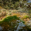 Lovely sphagnum pool