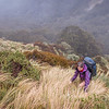 Steep tussock and hidden spaniards above bushline in Duffy's Creek