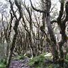 Bush above Upper Caples Hut.