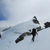 Jaz above Desperation Pass with Steffanson Peak.