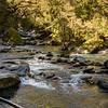 Upper Turnbull River.