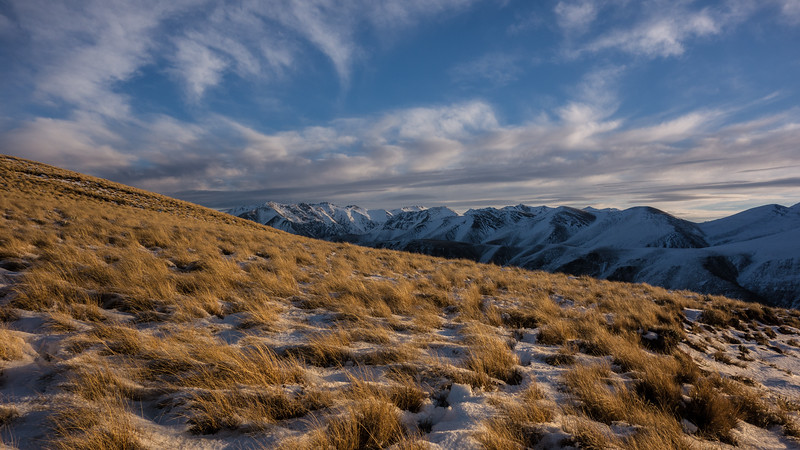 Tussock sidle into the Swift River.