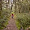 Relaxing walk through nice bech forest.
