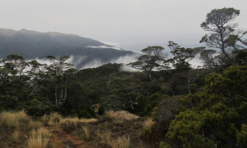 Boggy bushline below Eldrig Peak.