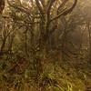 Great Krummholz near Little Wanganui Saddle.