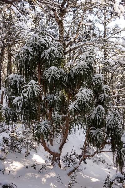 Snowy Dr Seuss tree.