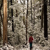 Travelling through snowy red beech forest.