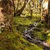 Lovely beech forest.