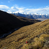 Spot Kat making her way through the Matagouri above the Cameron Valley, Taylor Range in the distance.