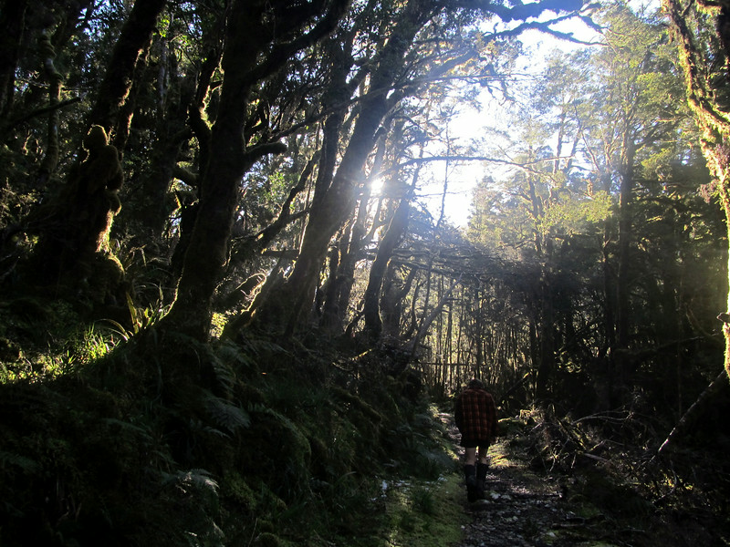 The track to Garden Gully Hut.