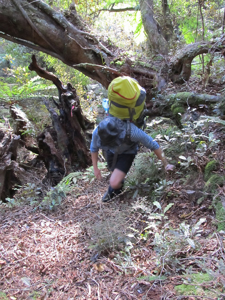 Grovelling up the steep bush track to Mt Kerr tops.