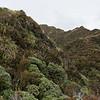 Scrubby tops below Mt Kerr.