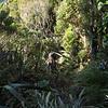 Climbing Dickie Spur.