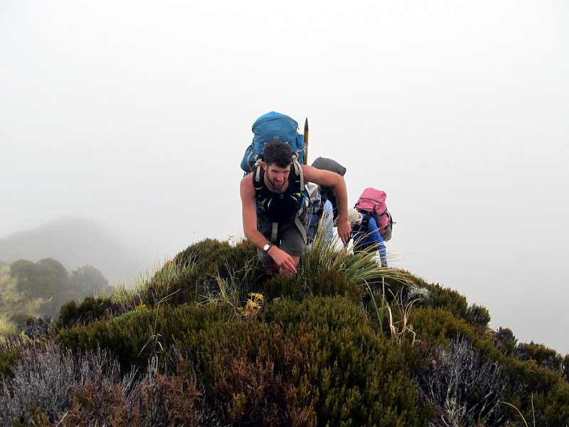 Tackling steep scrubby sections of the ridge above Mikonui Biv in the mist.