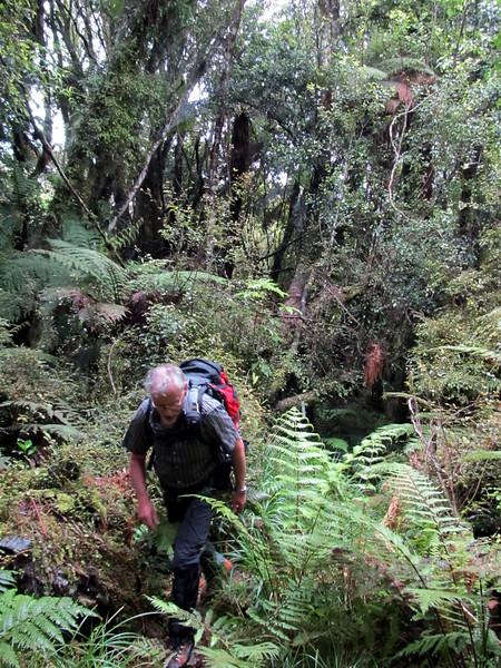 The tack through lovely lush West Coast bush.