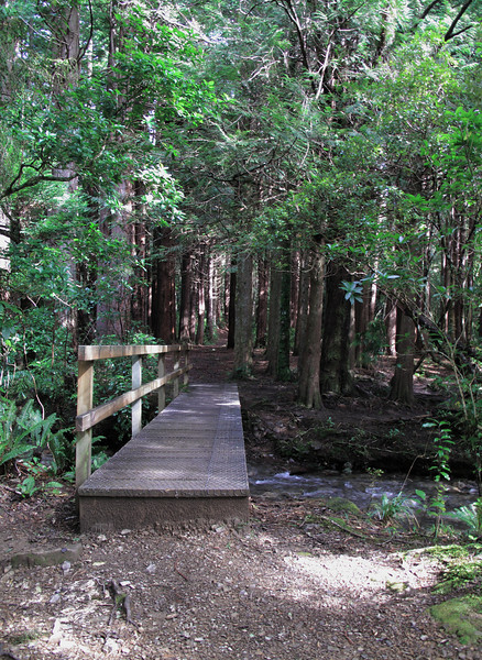 Bridge at beginning of track into beautiful Redwood Forest.