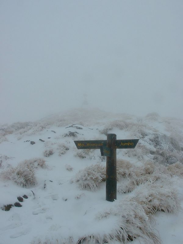 Look very carefully - thats the Mt Holdsworth Trig in the background! See it? No - not the green cross, that's the sign post pointing to the summit trig.