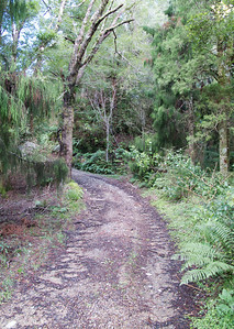 IMG_3021 Lower Slopes of Eastern Hutt River Track