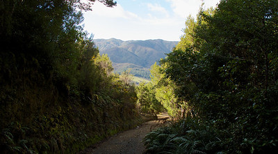 IMG_3028 Backward Glance while walking up Eastern Hutt River Track
