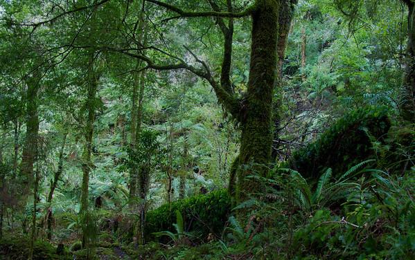 Kaitoke Regional Park to Eastern Hutt River  various Walks