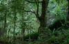 Lush Bush past Swingbridge Eastern Hutt River Kaitoke Regional Park Sep 2012