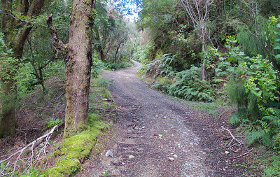 IMG_3023 Climbing the Eastern Hutt River Track Sep 2012f