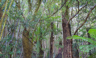 IMG_3049 Trees and Bush on descent to Hutt Forks, Kaitoke Regional Park