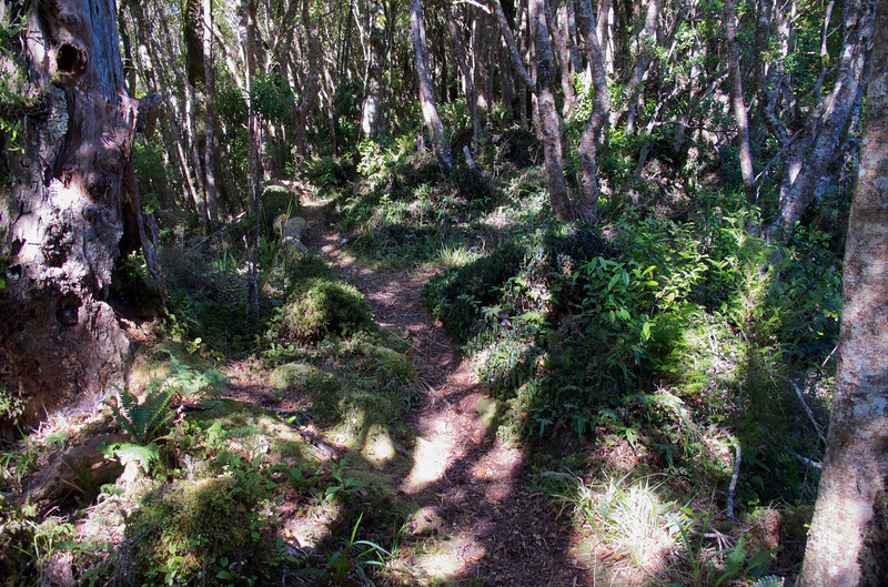 Almost impossible to get lost on the Kapakapanui Track