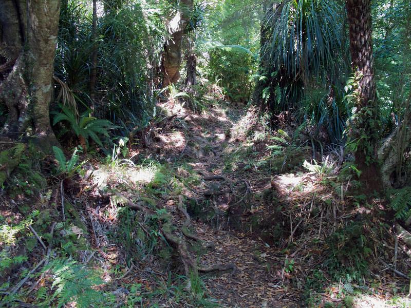 Typical walking on the Kapakapanui Track.