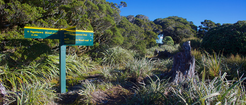 I tell a slight lie, this is the view the next morning as I left the summit of Kapakapanui and made my way back to the car, but it is the view I did see the previous evening when I broke free of the bush.